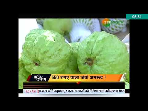 Zee Hindustan News Coverage on Door Next Farms : Amrud Man - A Success Story