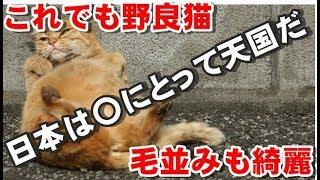 【海外の反応】「猫にとっては天国だね」日本の野良猫だけが持つとある特徴に外国人が衝撃