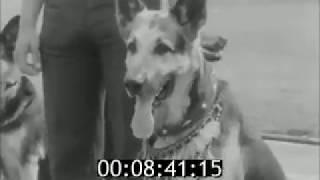 1979 г. СССР,Смоленск - Выставка собак