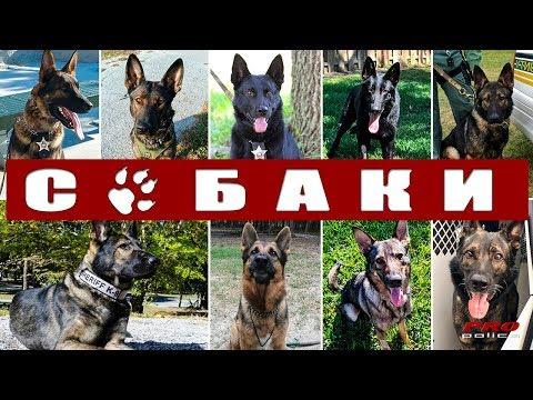 Собаки на службе полиции США: Флорида [К-9 в деле выпуск 4]