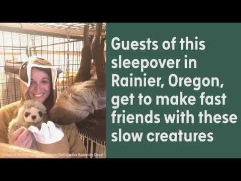 This Is What A Sloth Slumber Party Looks Like