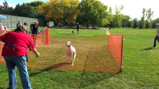 A Day of Lure Coursing