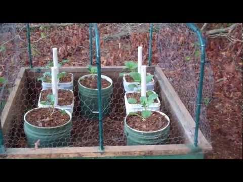 Protecting Your Garden From Animals Youtube