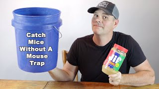 How to catch mice without a mouse trap. A simple trick that works! Mousetrap Monday