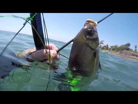 Santa Barbara Spearfishing
