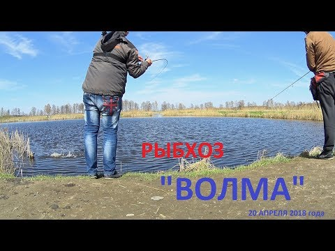 Рыбхоз ВОЛМА. Щучье Эльдорадо!!! Платная рыбалка в Беларуси.
