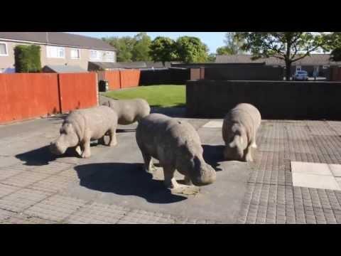 Killingworth Hippos - 3rd June, 2013