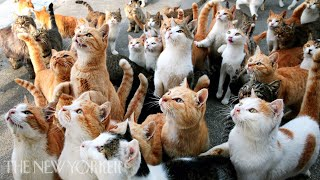 Why Humans Are Obsessed with Cats | Annals of Obsession | The New Yorker