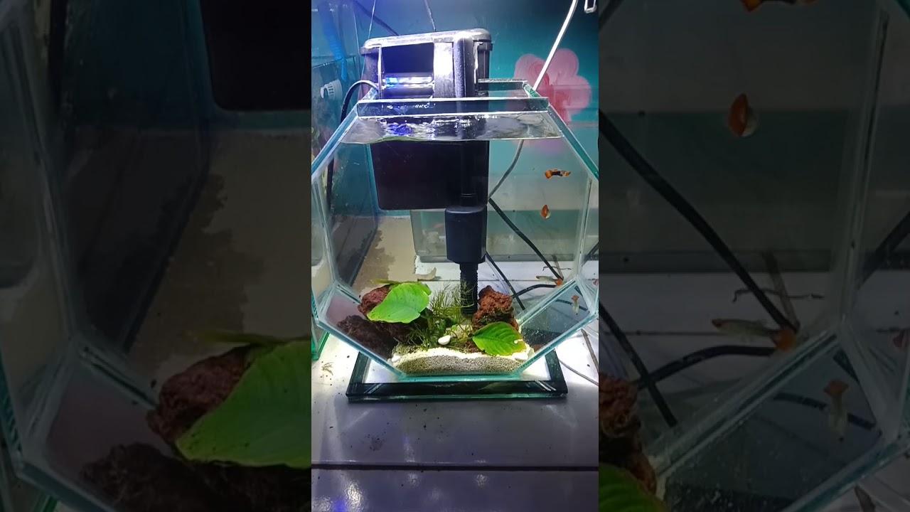 Aquarium Mini Segi 6 Youtube