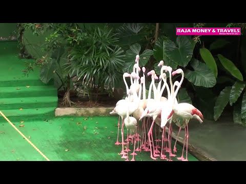 Malacca Zoo Birds Parade HD Video - Malaysia, Asia Holiday Packages