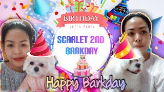My Scarlet 2nd Barkday +Maltese Puppy