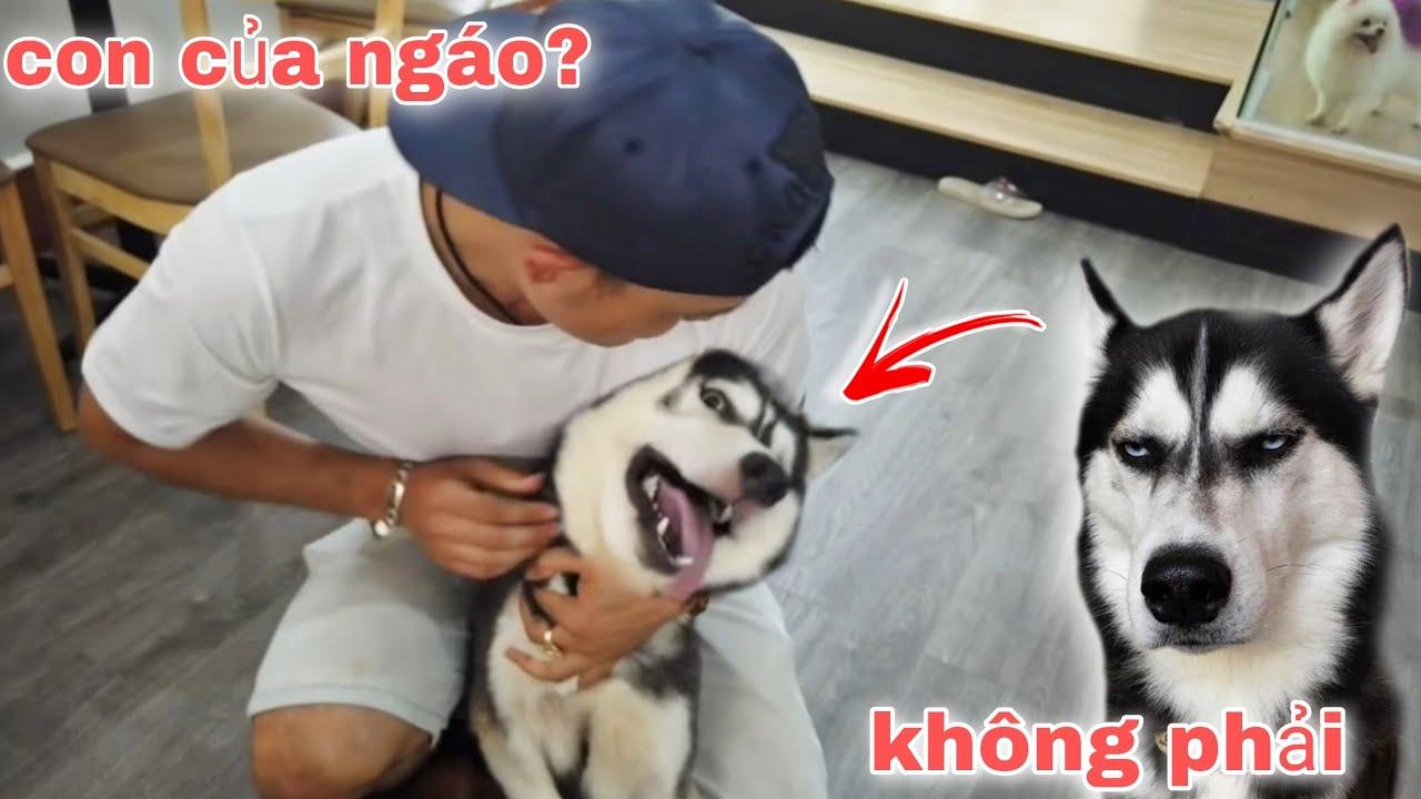 Hùng Panda | Bị Đàn Chó Đắt Tiền Tấn Công Khi Đột Nhập Vào Quán Cafe Chó NTN | Team Dương KC
