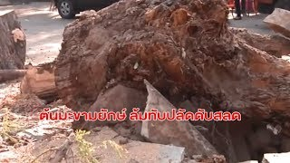 พายุฤดูร้อนถล่มชัยภูมิเสียหาย 200 หลังคาเรือน - พายุหมุนโค่นต้นมะขามยักษ์ 200 ปี ล้มทับปลัดเสียชีวิต