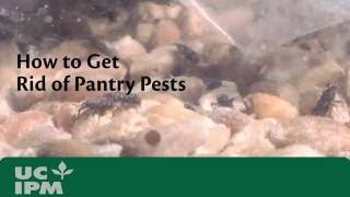 How to Get Rid of Pantry Pests