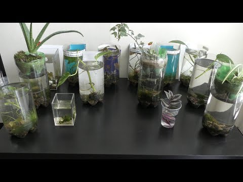 Fish Care In Bottle Aquariums Natural Update