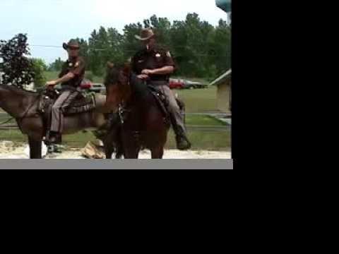 Hobbie the First Amazing Horse from Brian Bausch.com