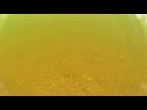 Видео зимняя рыбалка на -