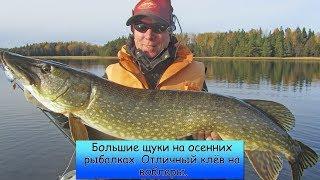 Шок. Большущие щуки на осенних рыбалках  Отличный клёв на воблеры