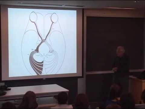 David Hubel : The Brain and Visual Perception