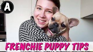 FRENCH BULLDOG PUPPY TIPS