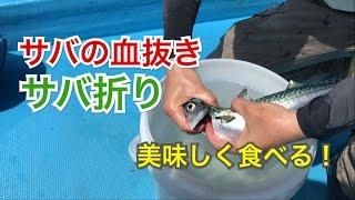 サバの締め方・血抜き方法 サバ折り編 #釣りざんまいTV #魚の血抜き #サバ折り #神経締め