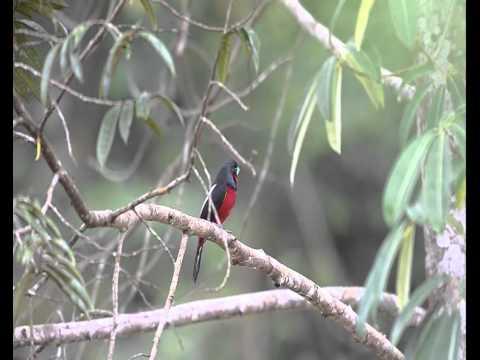 Birds of Peninsular Malaysia V3