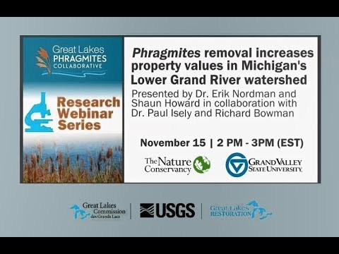 Phragmites removal increases property values in Michigan's Lower Grand River watershed