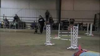 Field Spaniel Agility - Ex A Jww Run