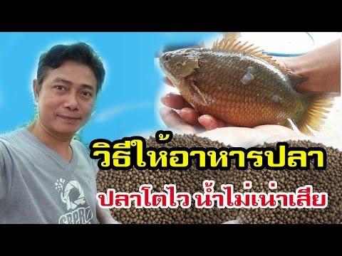วิธีให้อาหารปลา ปลาโตไว น้ำไม่เน่าเสีย