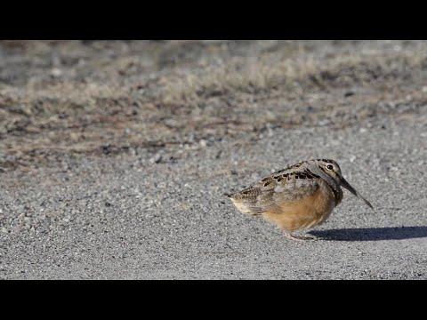 Tiny Dancing Bird