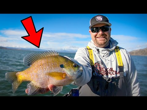 Winter Fishing For Bull Bluegill And Crappie