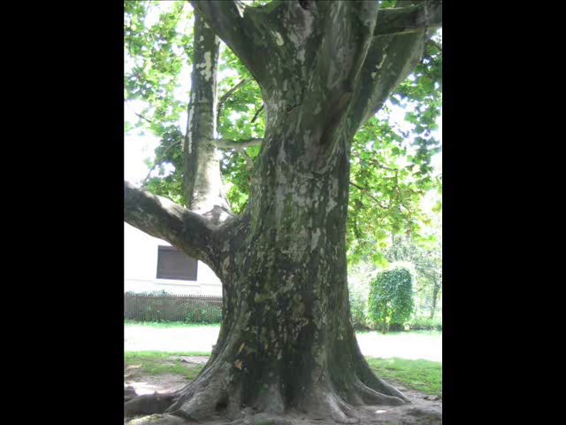 Szögletes Üveggolyó - Ez egy Fa