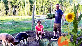 These 2 Pigs are Saving us $100s! Planting a 3 Sisters Garden With PIGS