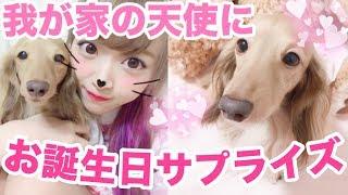 沢山のおもちゃが降ってきたら愛犬はどうする?【ノアたん誕生日サプライズ!】 thumbnail