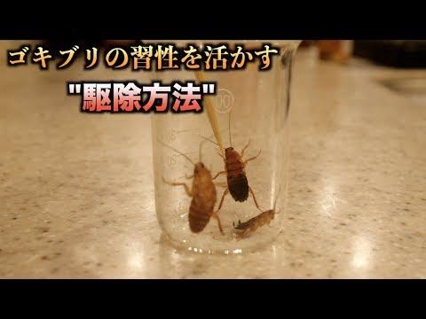 【実験】ゴキブリの習性を利用すれば簡単に駆除できることがわかる動画