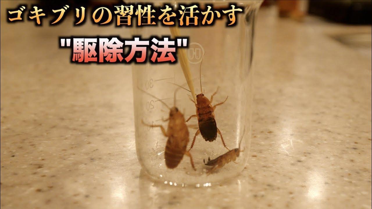 ゴキブリ 退治 法