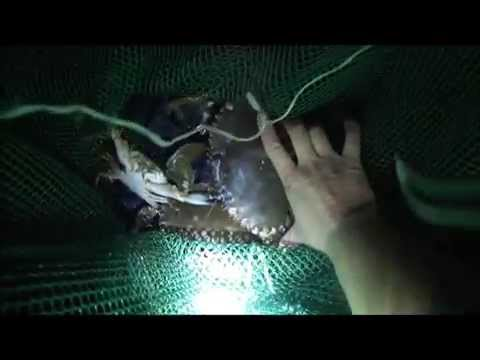 Caught Huge Samoan Crabs On Oahu + Crab Lunch
