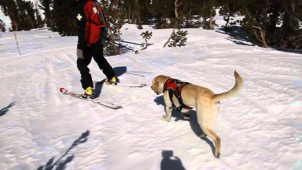 1aa9222e4af3 Meet Avalanche Dogs of Mammoth - YouTube