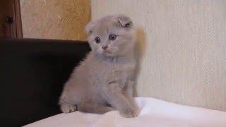 Наши любимые котята №1