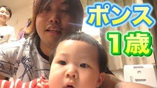 【ポンス誕生日】お祝いメッセージ全編!【しばなんチャンネル】 thumbnail