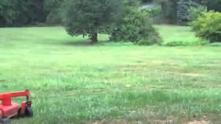Maryland Dog Training  Fantastics Ball Review