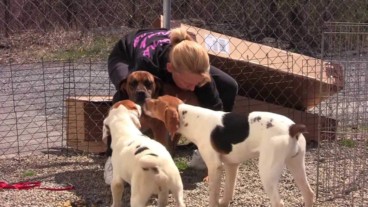 Rescue Dog Adoptions Youtube