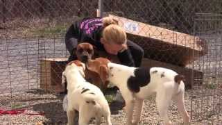Free To Be Me - Puppy Mill Rescue Dogs Now Thriving!