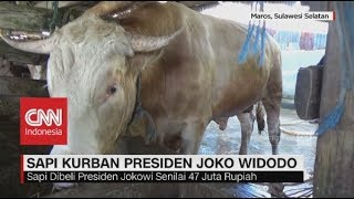video jokowi