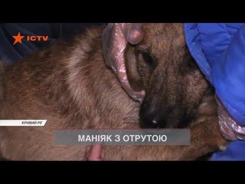 Нелюди отруїли собак невідомою речовиною у Кривому Розі