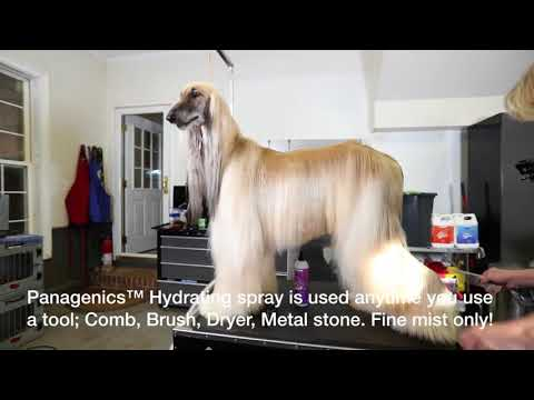 Smart Dog Afghan Hound