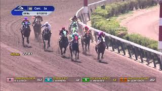 Vidéo de la course PMU PREMIO BALNERIO