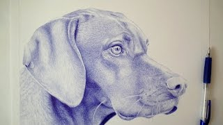 TIMELAPSE  How to draw a dog  Ballpoint