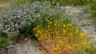 38-Amália Rodrigues canta,'Cantigas Medievais'-