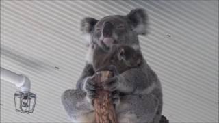 Australia Wild Life Sydney Zoo シドニー ワイルド ライフ ワールドに...